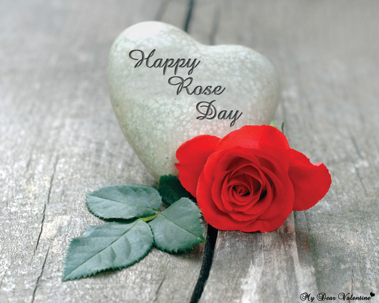 Rose Day HD Photo